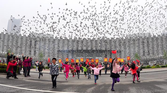 2017年北京市第九届体育大会信鸽550公里全市联翔
