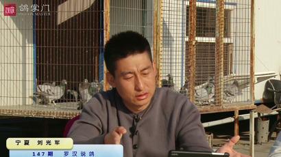 《罗汉说鸽》第147期 做客宁夏刘光军鸽舍(中)