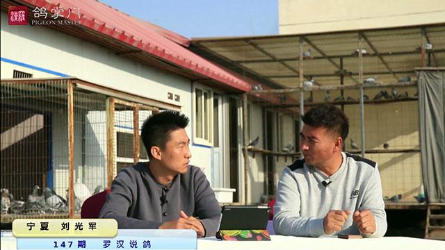 第147期《罗汉说鸽》做客宁夏刘光军鸽舍(下)