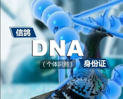 基因.png