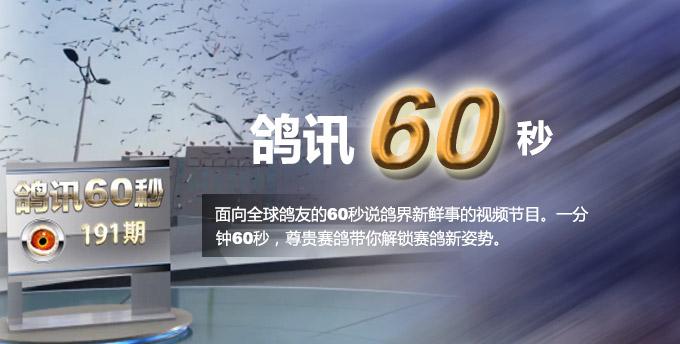 鸽讯60秒