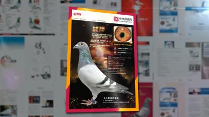 《尊贵赛鸽》2018 第五期 已发行!