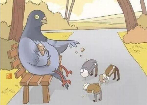 """不要太""""爱""""鸽子!"""