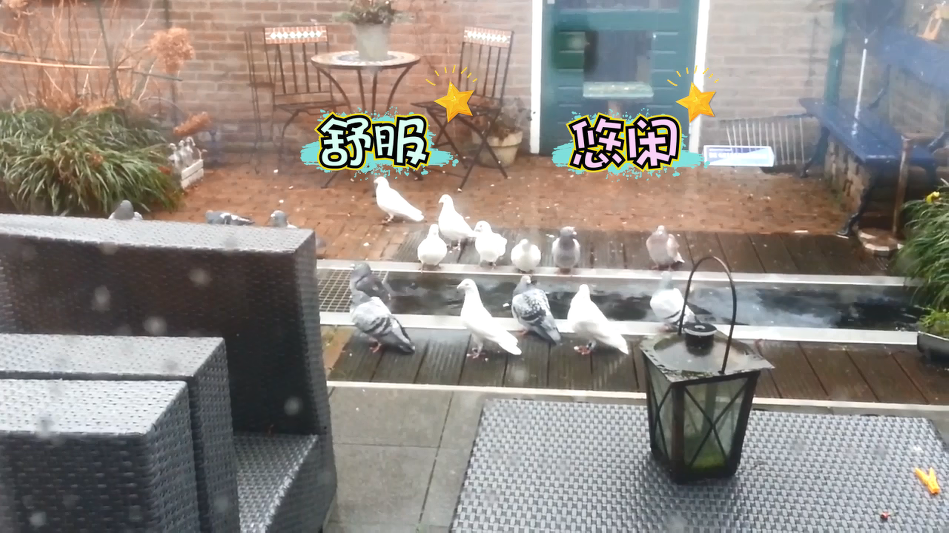 看完我也想做一羽快乐的鸽子