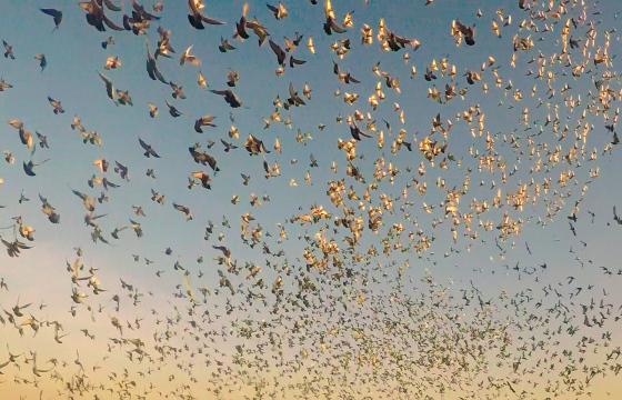 神州辉煌赛鸽公棚200公里热身赛直播集锦