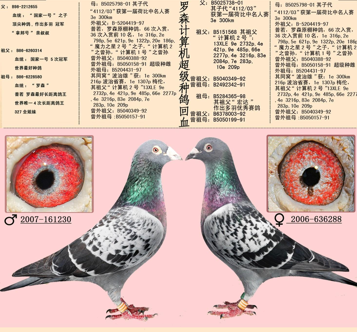 罗森计算机超级种鸽回血_副本.jpg